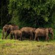Tholpetty Wildlife Sanctuary - Where Wildlife Thrives