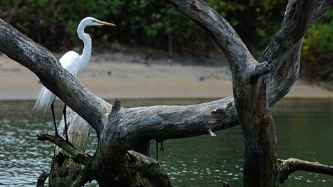 Birders' Delight – Kadalundi Bird Sanctuary