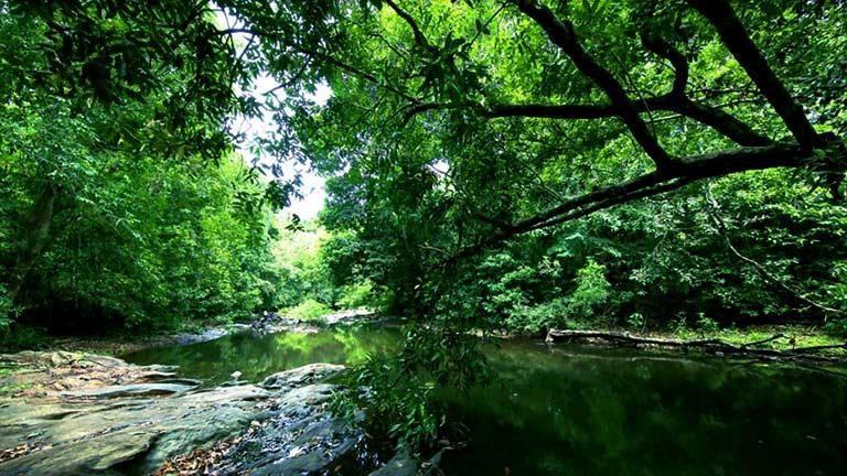 Trek through Kannavam Forest