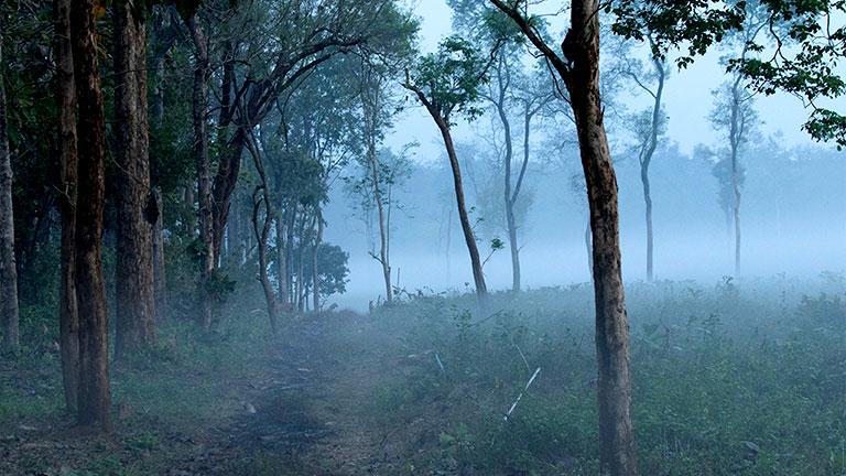 Trekking trails of Nedumkayam