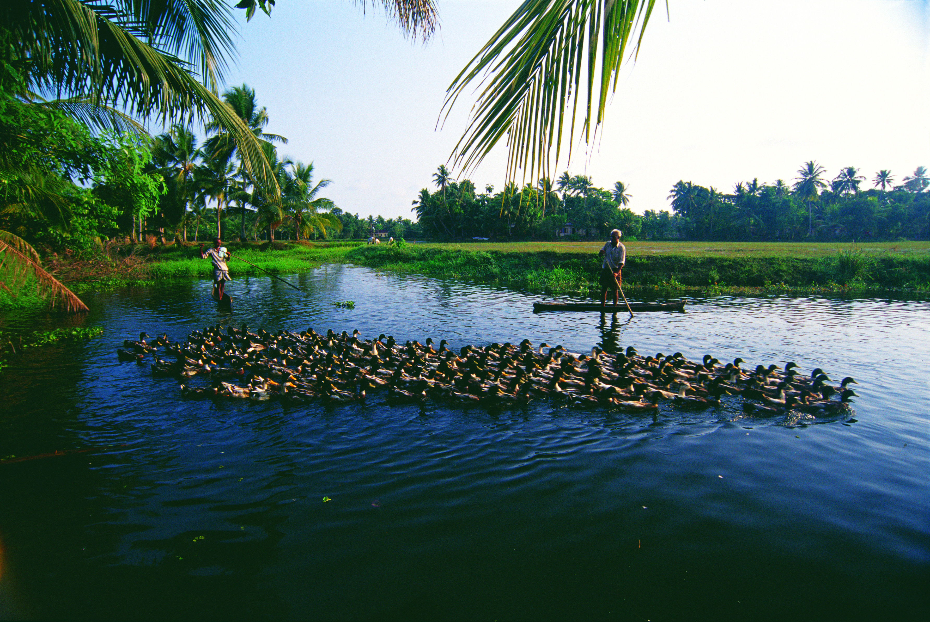 backwater tourism Poovar hotels and resorts special 50% discounted rate for online booking only book your boat trips too poovar backwater cruise will give you an amazing memories.