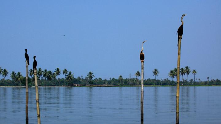 Backwaters d'Alappuzha 1