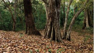 Forêt d'Arippa