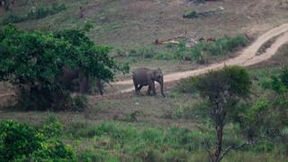 Éléphant à Nelliyampathy