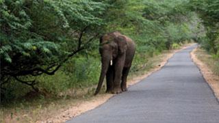 चिन्नार में सड़कों के पास चलते हाथी