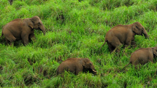 الفيلة في بيريار