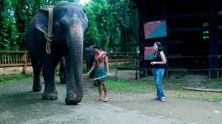 Camp d'éléphants à Kodanad - 1