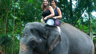Camp d'éléphants à Kodanad