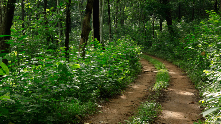 Bosque de Konni 2