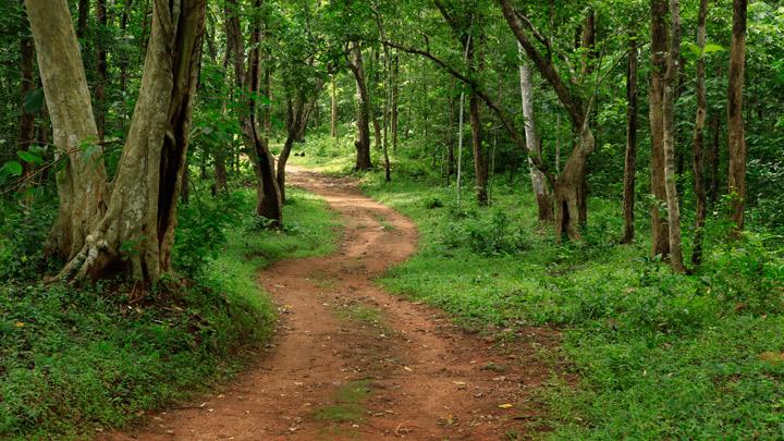 Bosque de Konni