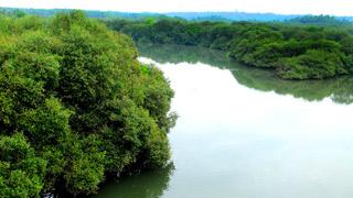 Bosque de manglares, Kannur