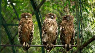 Owls, Thrissur Zoo