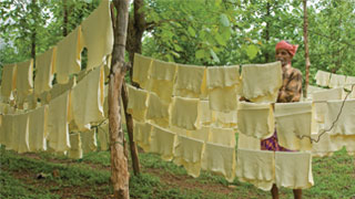 Rubber sheets being dried at Kanjirapally