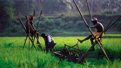 Kuttanad - le bol de riz du Kerala
