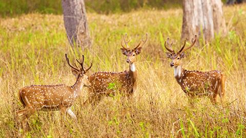 Sanctuaire de la faune Muthanga