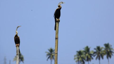 Kumarakom Vogelschutzzentrum