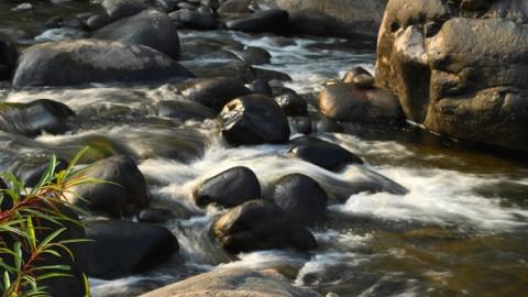 नेडुंक्कयम वर्षा वन, मलप्पुरम