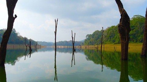 పెరియార్ టైగర్ రిజర్వ్, తేక్కడి
