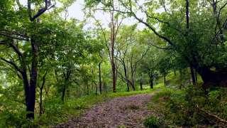 The Green, Wild Paradises