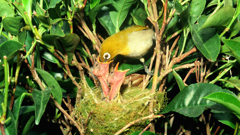 Birds in Munnar
