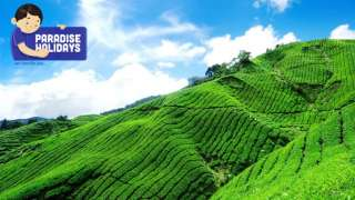Munnar And Houseboat Tour