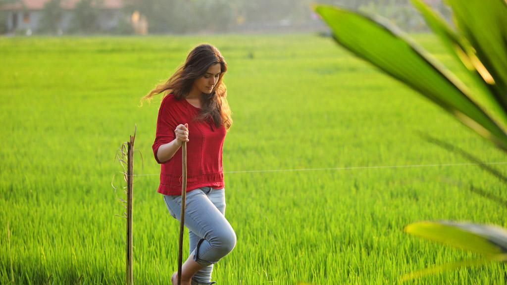 A Walk through Paddy Fields of Kerala   Village life Experience   Kerala  Tourism