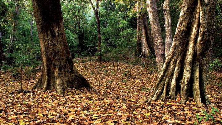 Arippa Forest in Thiruvananthapuram