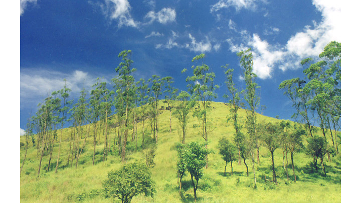Hills of Wayanad Images