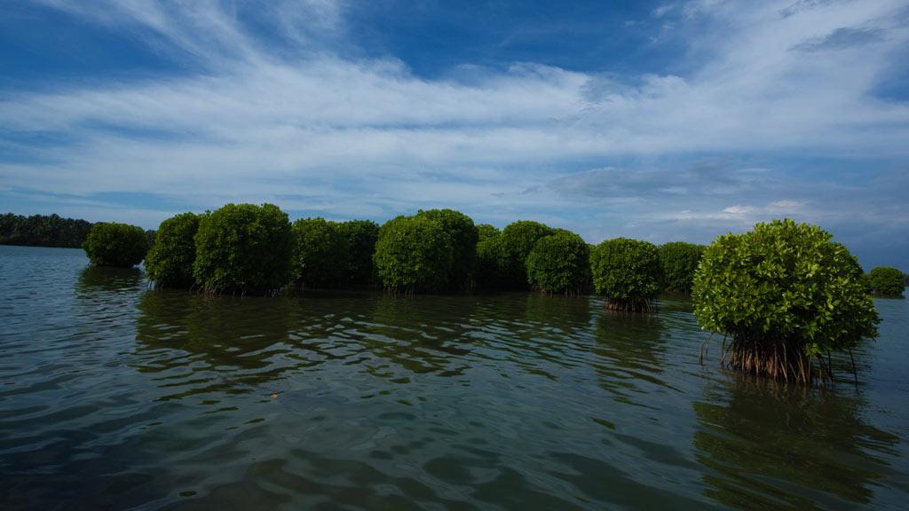 Kavvayi Backwater