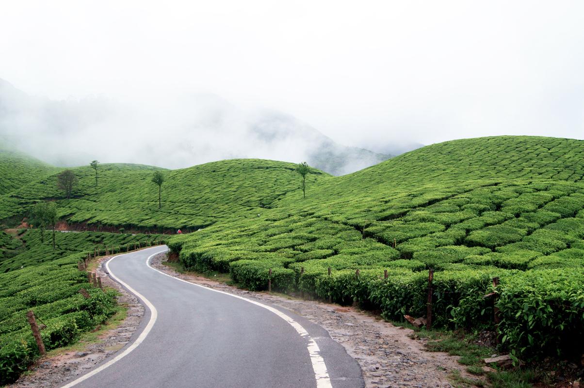 Tea Plantations In Munnar Destinations Kerala Tourism