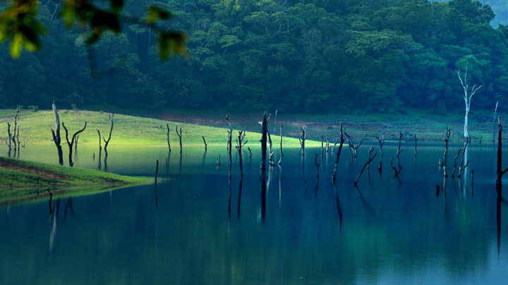 Thekkady: Your Gateway to the Wild
