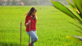 A Walk through Paddy Fields