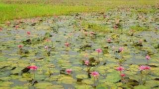 Un étang sur le chemin à Kottayam