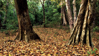Forêt d'Arippa à Thiruvananthapuram