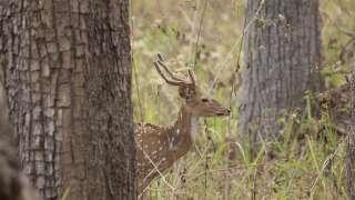 Deer inside Muthanga   Wayanad Wildlife Sanctuary