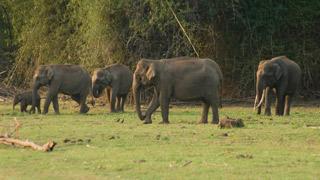 Les troupeaux d'éléphants à Begur