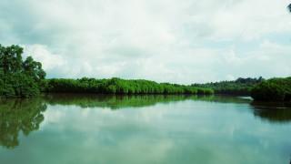 Kumbla Mangrove Forest