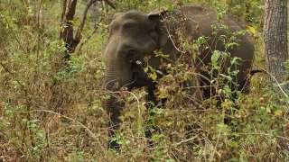 Muthanga and the Pachyderms   Muthanga