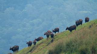 Periyar Wildlife Sanctuary, Thekkady