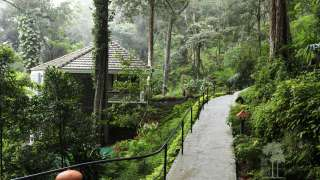 Click here to view the details of The Tall Trees Munnar