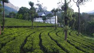 Click here to view the details of Tea Harvester