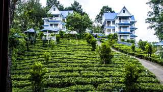 Click here to view the details of Camellia & Elettaria (The Twin Resorts) Munnar