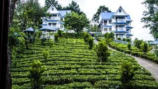 Camellia & Elettaria (The Twin Resorts) Munnar