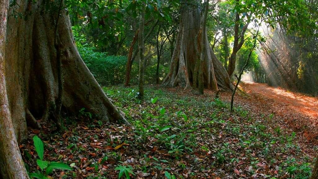 Aralam Forest