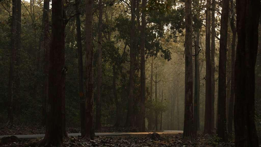 Kannavam Forest Range