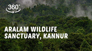 Aralam Wildlife Sanctuary, Kannur  | 360° Video