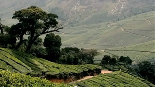 Best of Munnar - I