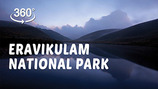 Eravikulam National Park | 360° Video