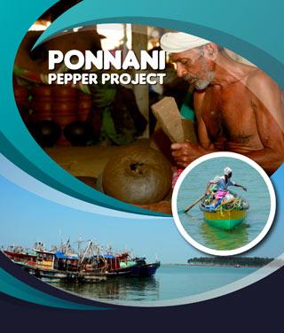 Ponnani Pepper Project