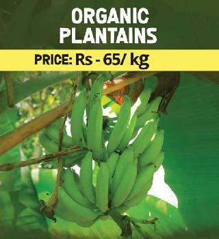 Organic Plantains